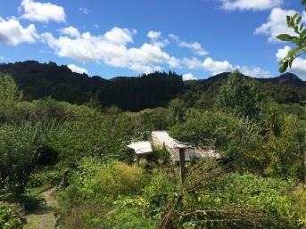 Organic Fruit from in Kaiwaka