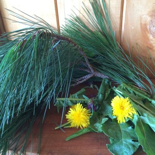 Picking fresh herbs