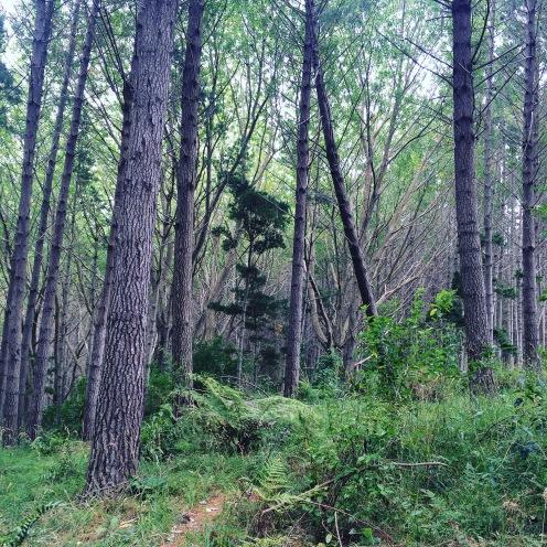 Forrest walks